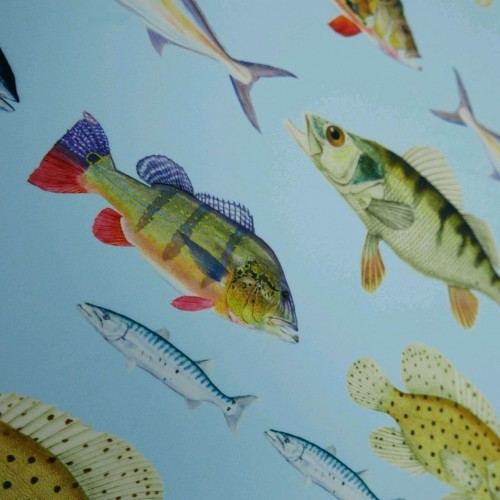 Эластичный креп с рыбами